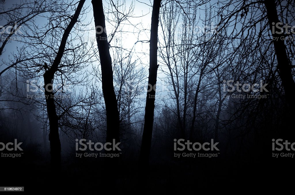 Mood Shadows in the Dark Misty Forest stock photo