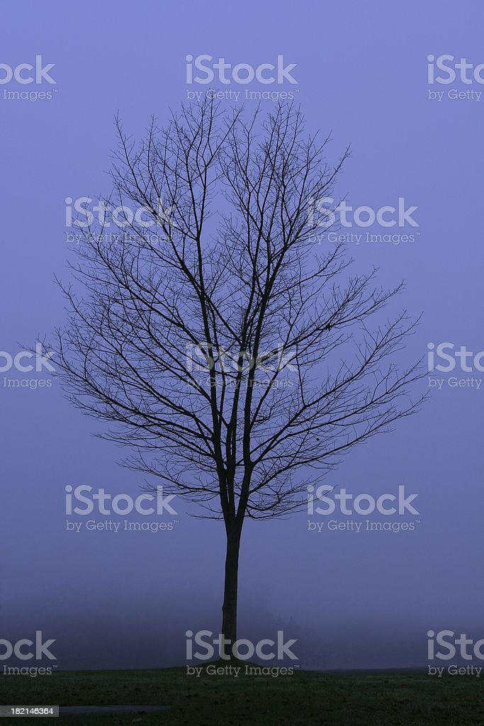 Moody Blue November Day royalty-free stock photo