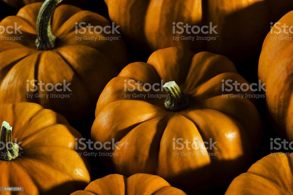 Moody Pumpkins royalty-free stock photo