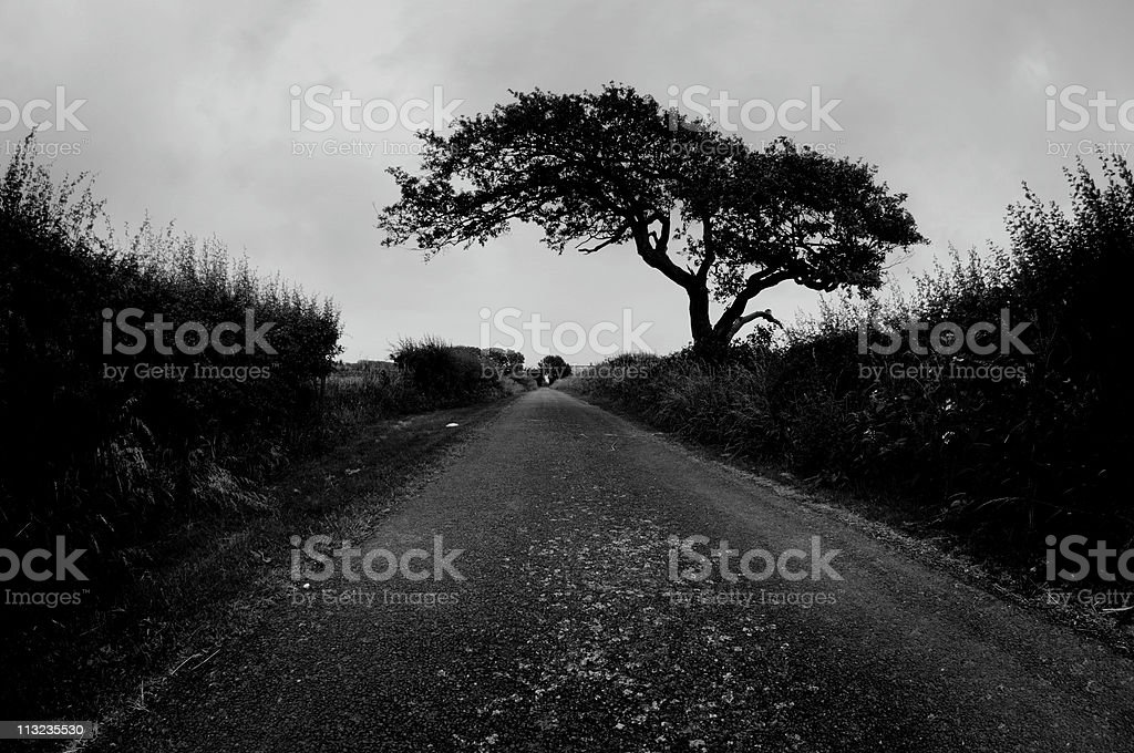 Moody rural road with sinister tree stock photo