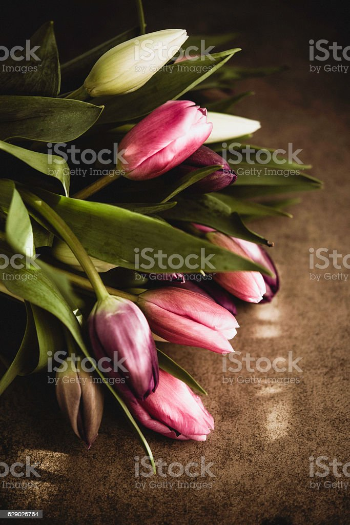 Moody shot of a tulip bouquet in dappled sunlight stock photo