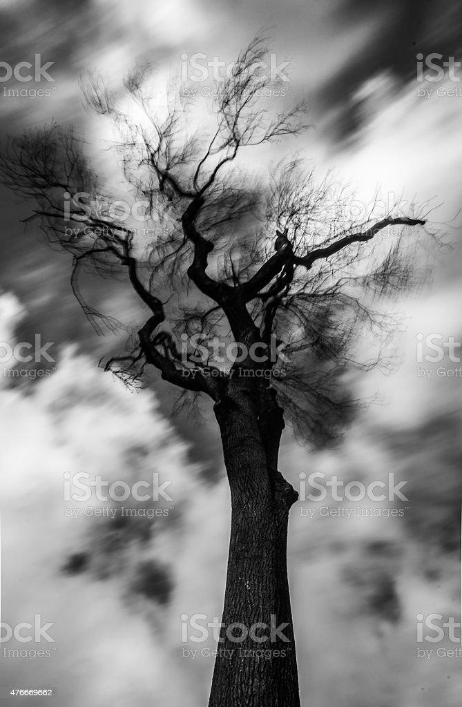 Moody tree photo libre de droits