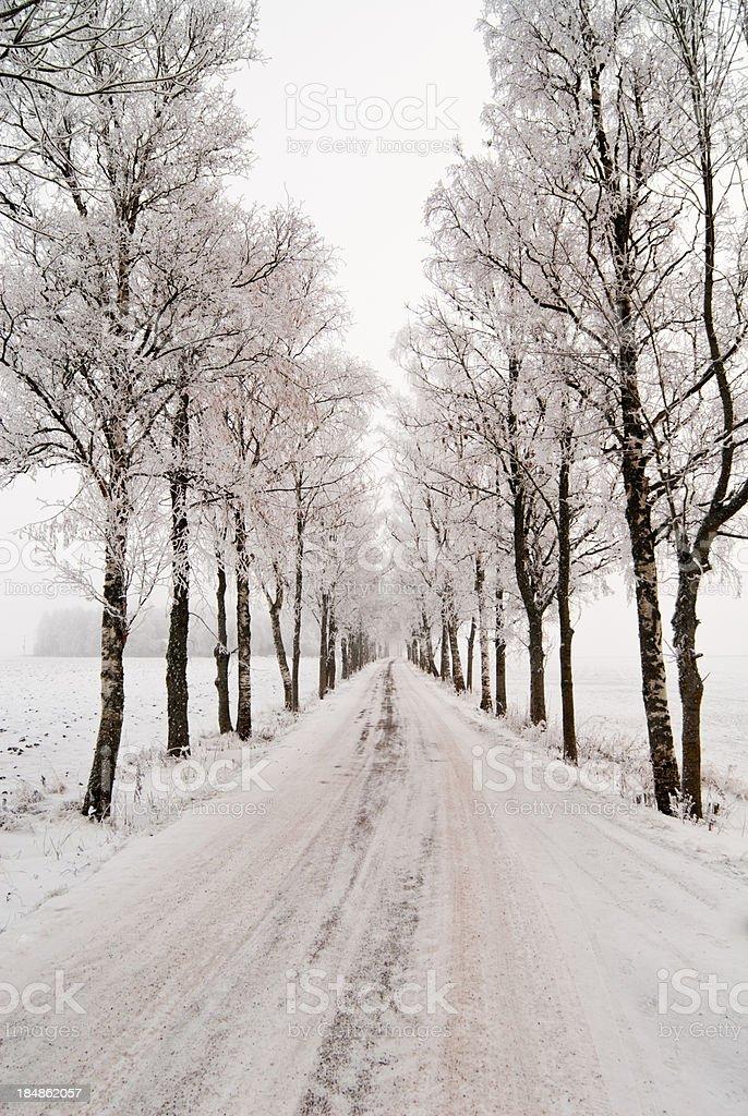 Moody winter road royalty-free stock photo