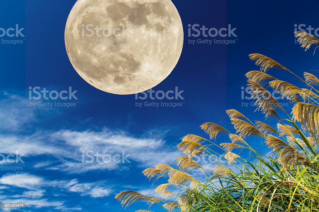 Moon and Japanese pampas grass stock photo