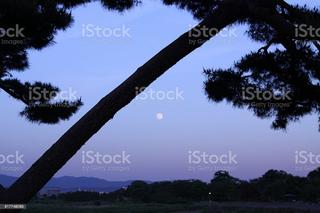 moon and pound in kyoto stock photo