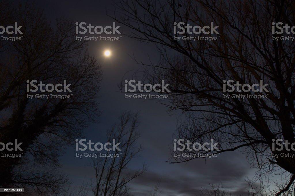 Moon and trees stock photo