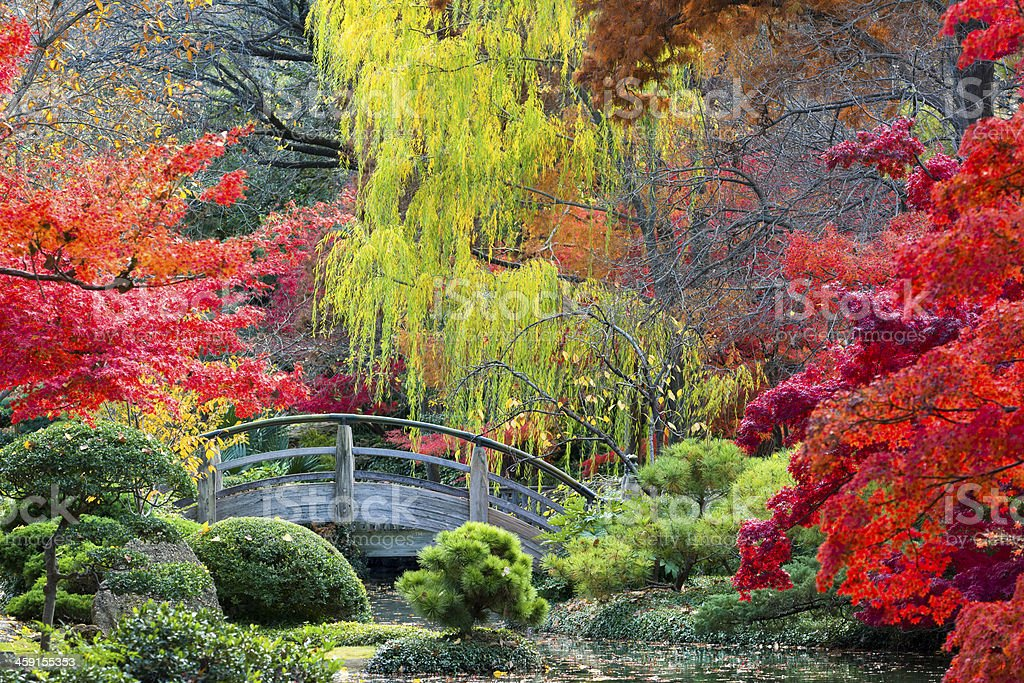 Moon Bridge in the Japanese Gardens stock photo