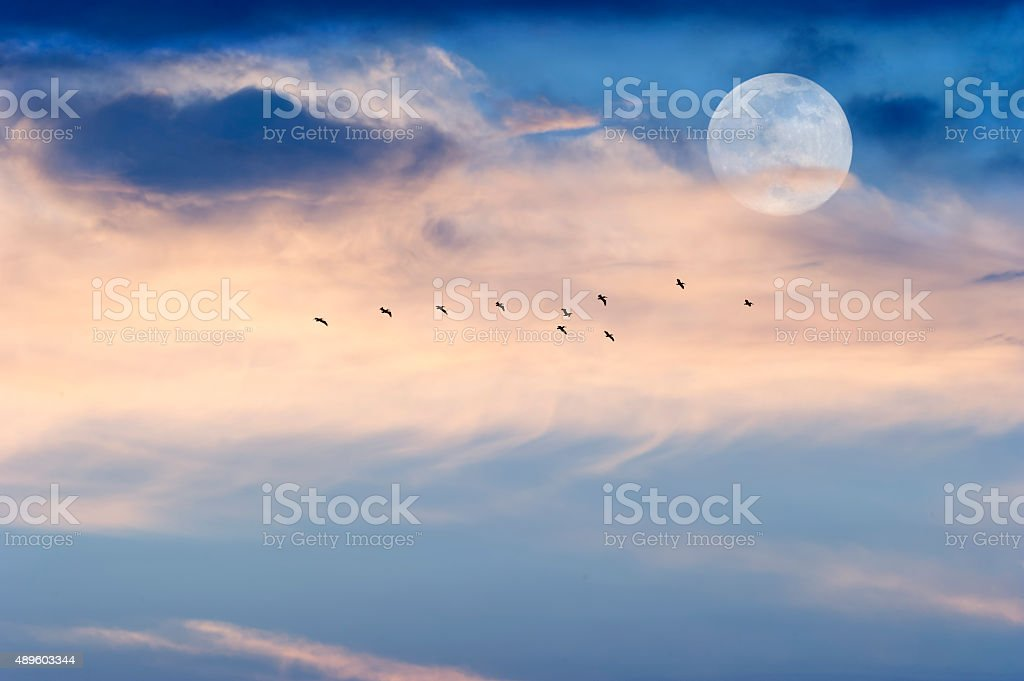 Moon Clouds Skies Birds stock photo