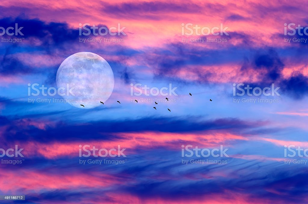 Moon Clouds Skies Birds Silhouette stock photo