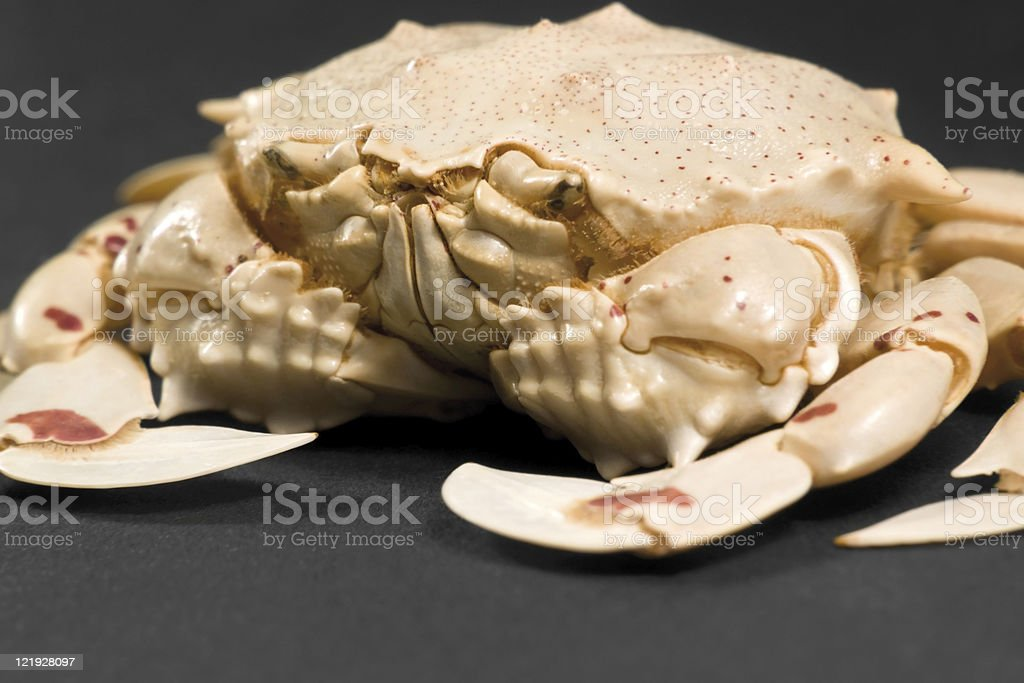 moon crab detail stock photo