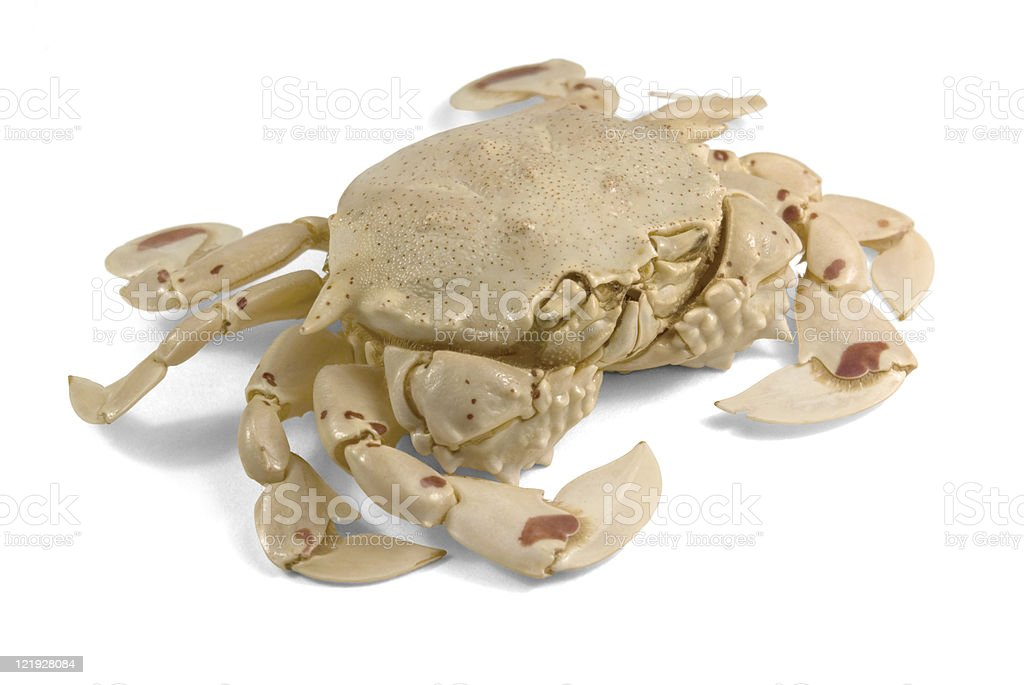 moon crab in white back stock photo