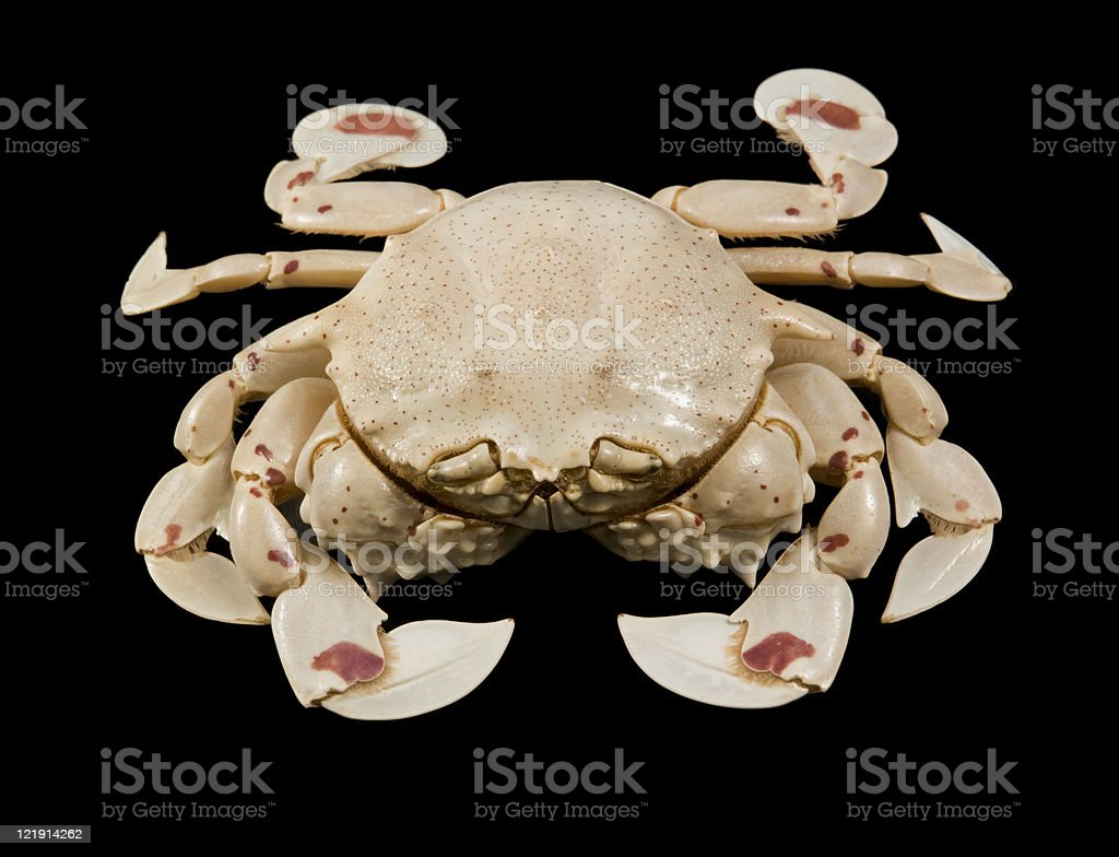 moon crab isolated on black stock photo
