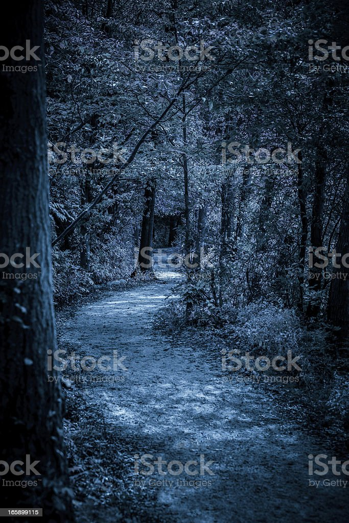 Moon Lit Path In Forest At Night royalty-free stock photo