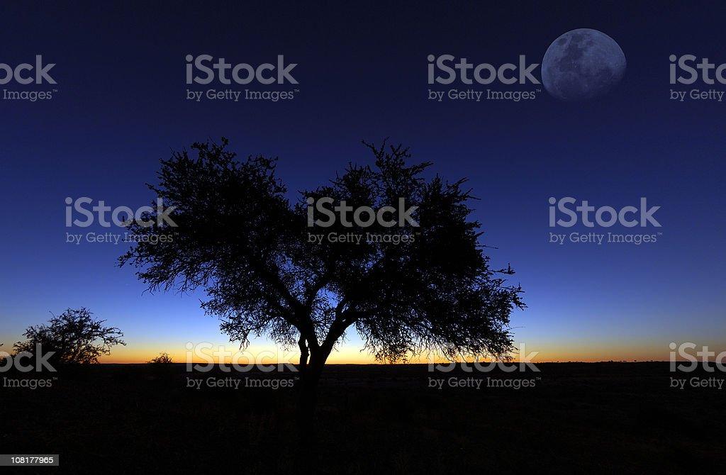 Moon over mashatu stock photo
