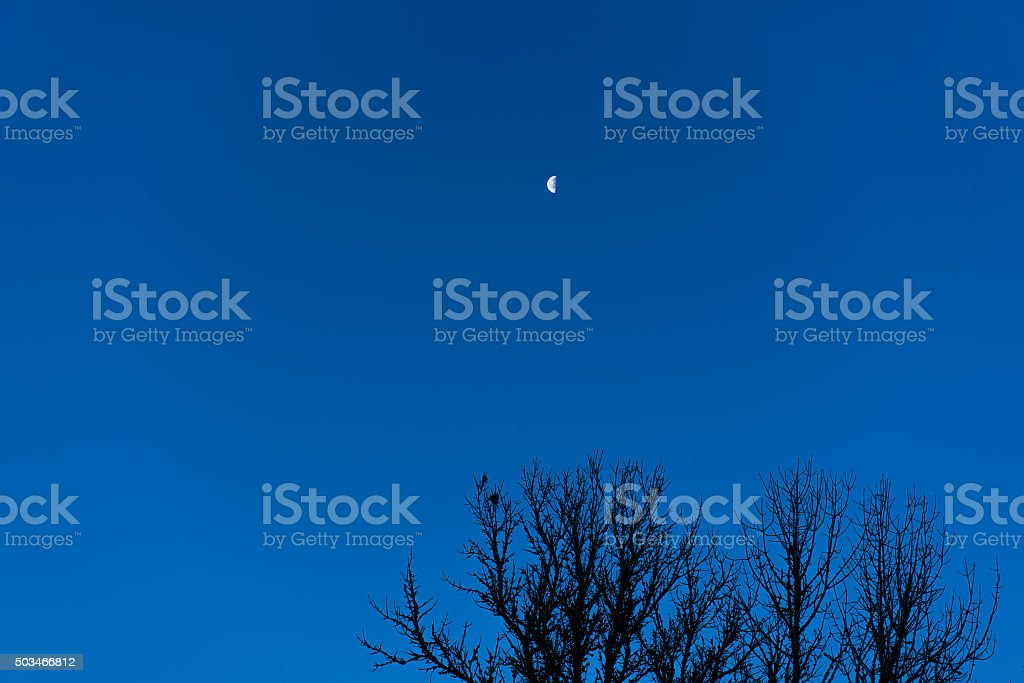 Moon over the Tree stock photo
