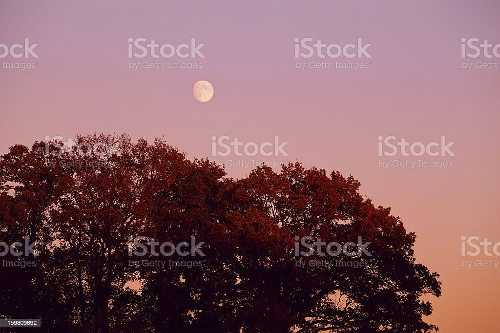 moon over tree at sunset royalty-free stock photo