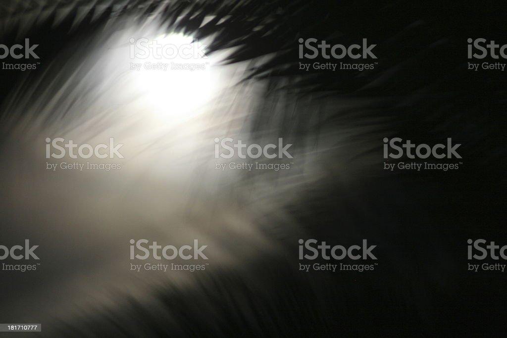 moon royalty-free stock photo