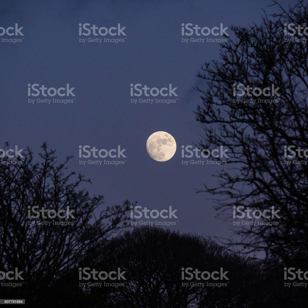 Moon rise stock photo