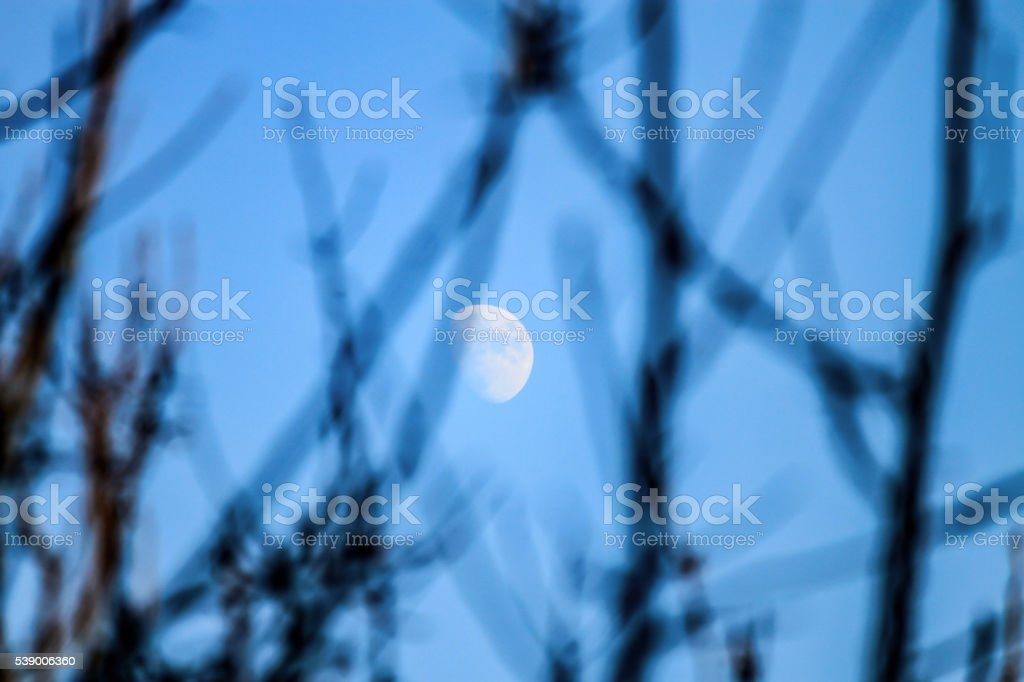 Moon rising between branches stock photo