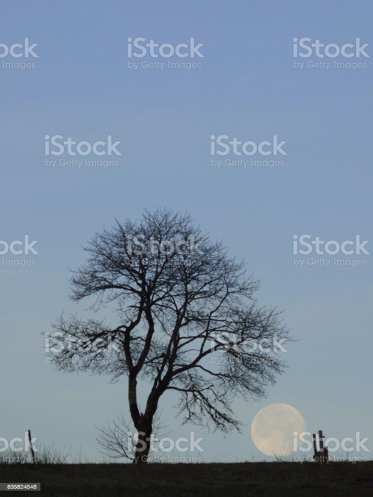 Mooncatching stock photo