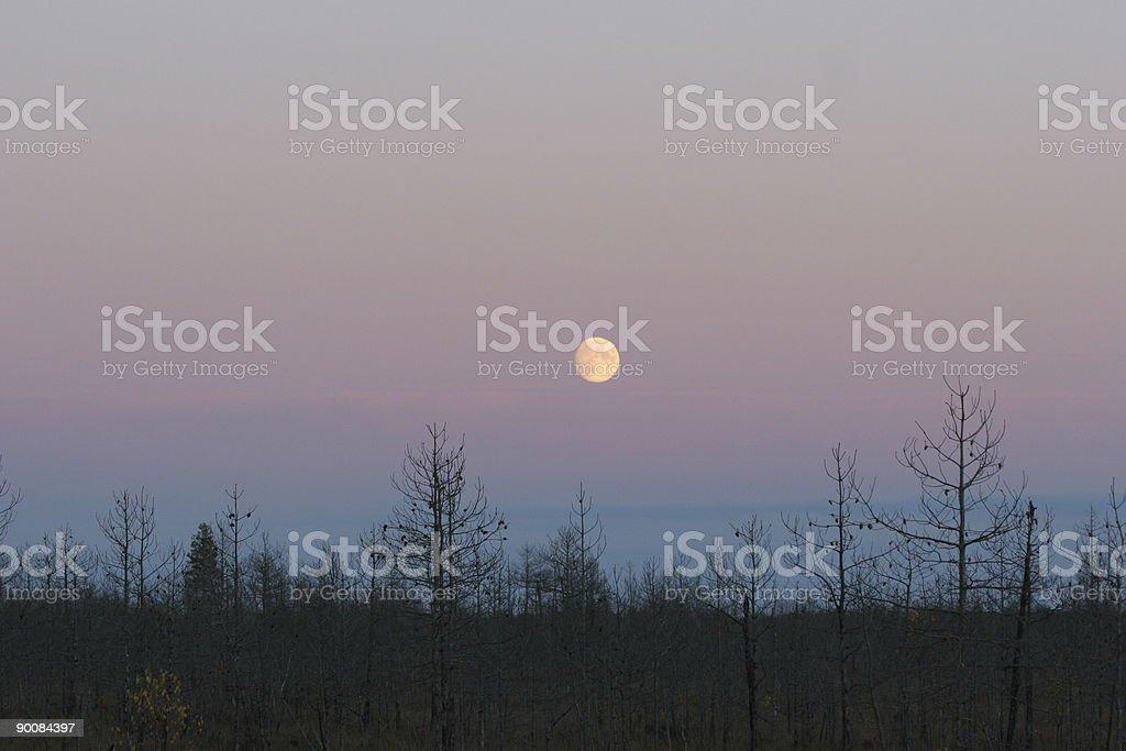 Moonlight royalty-free stock photo