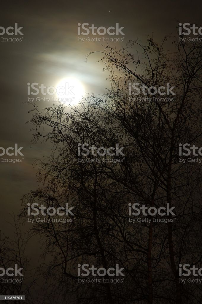 Moonlight Silhouette #2 royalty-free stock photo