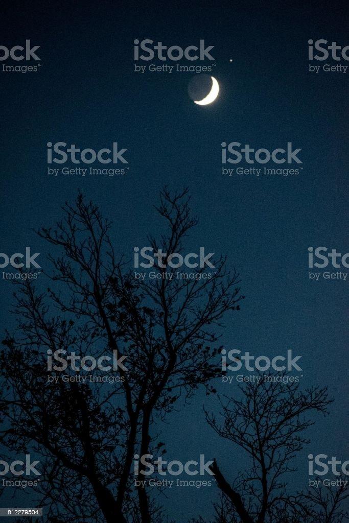 Moonlight View stock photo