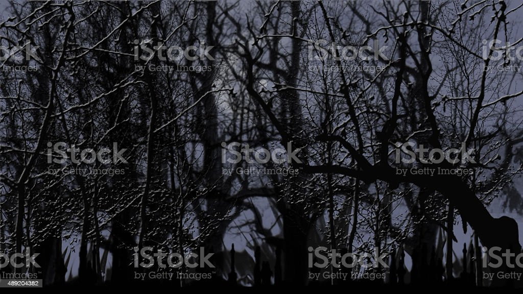 Moonlit Branches stock photo