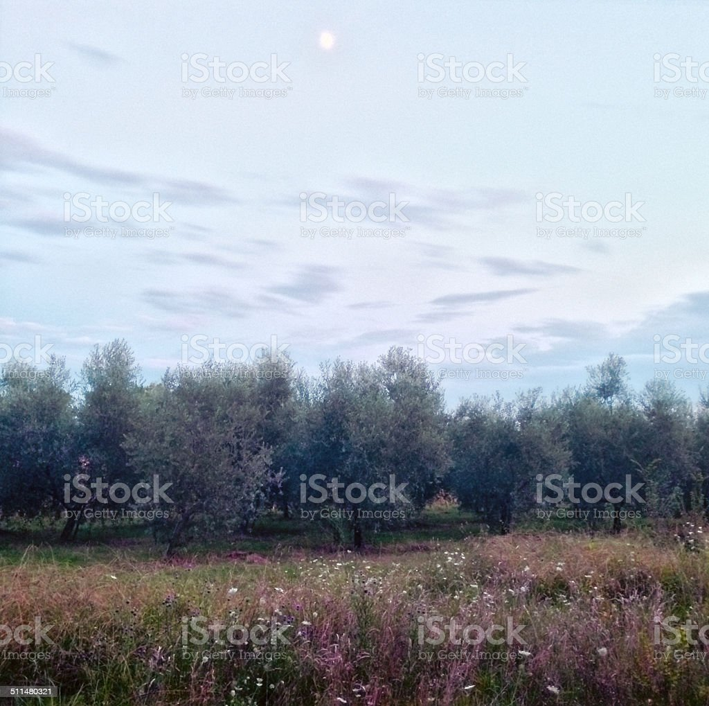 Moon-lit landscape in Tuscany stock photo