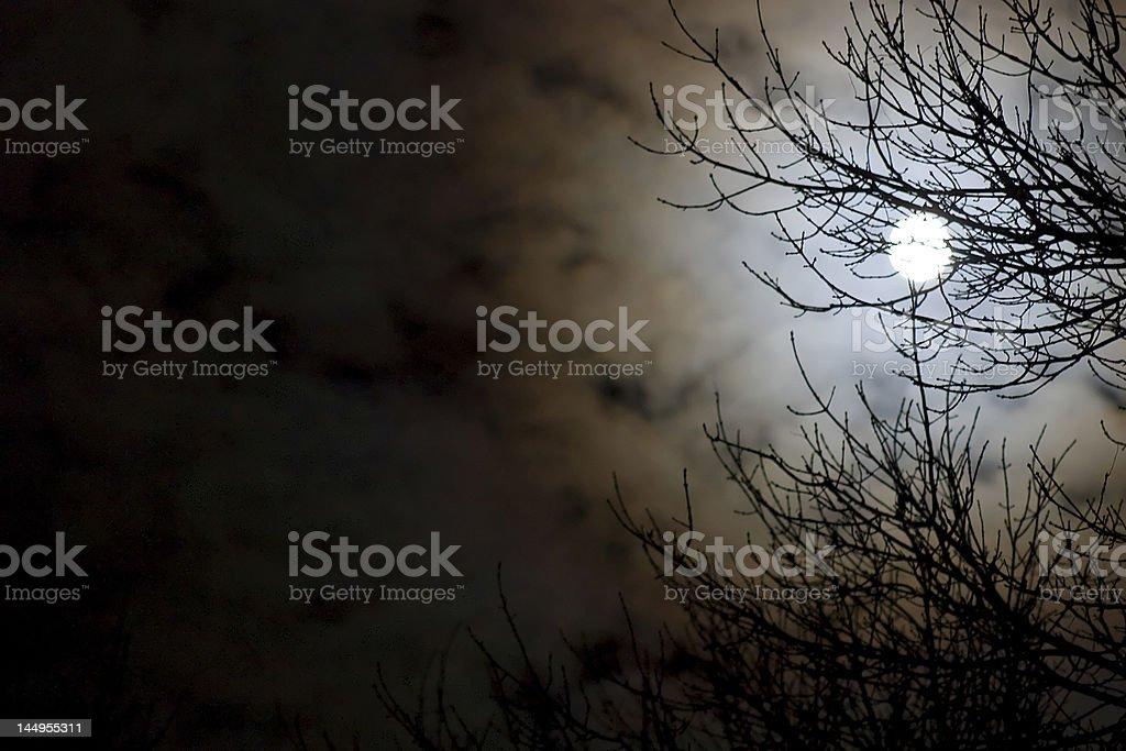 Moonlit Night royalty-free stock photo