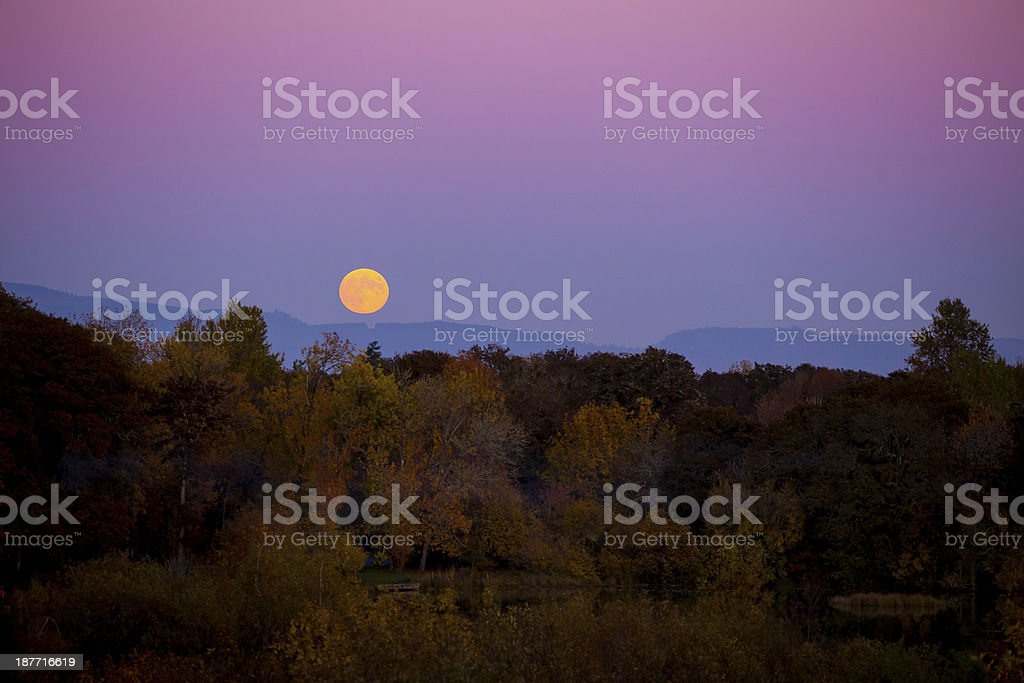 Moonrise in the Fall stock photo