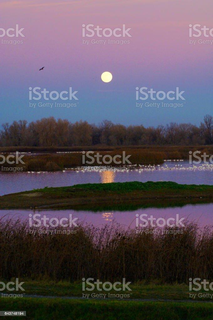 Moonrise Over Sacramento Naional Wildlife Refuge stock photo