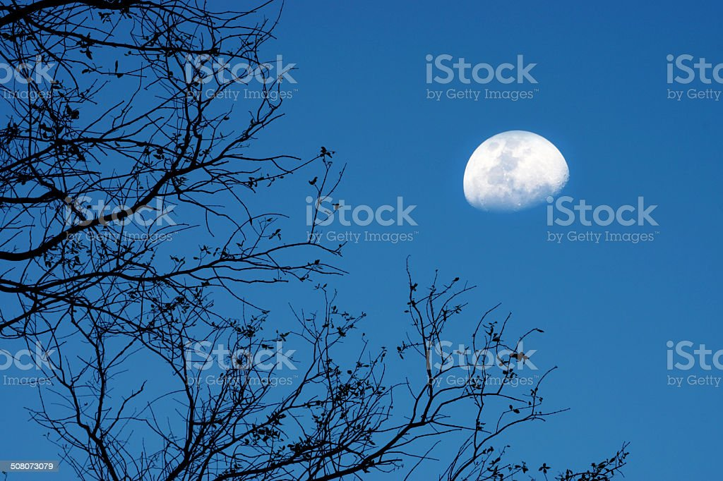 Moonset and twigs stock photo