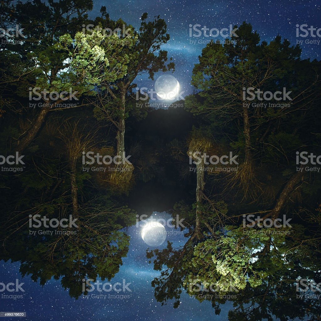 Moonset in coniferous forest, mirrored stock photo