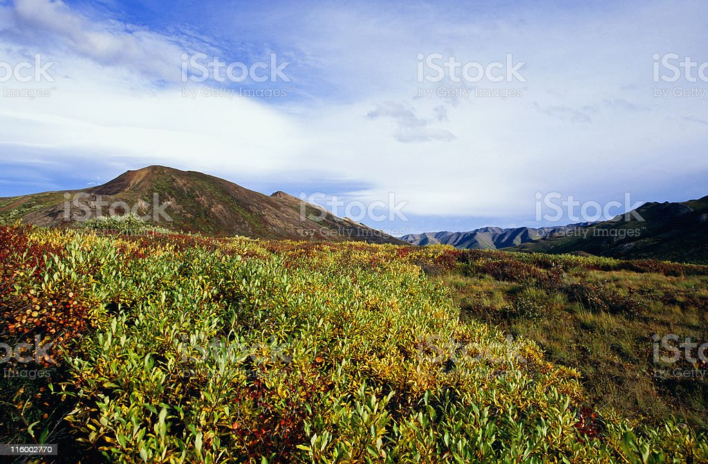 Moor in autumn color stock photo