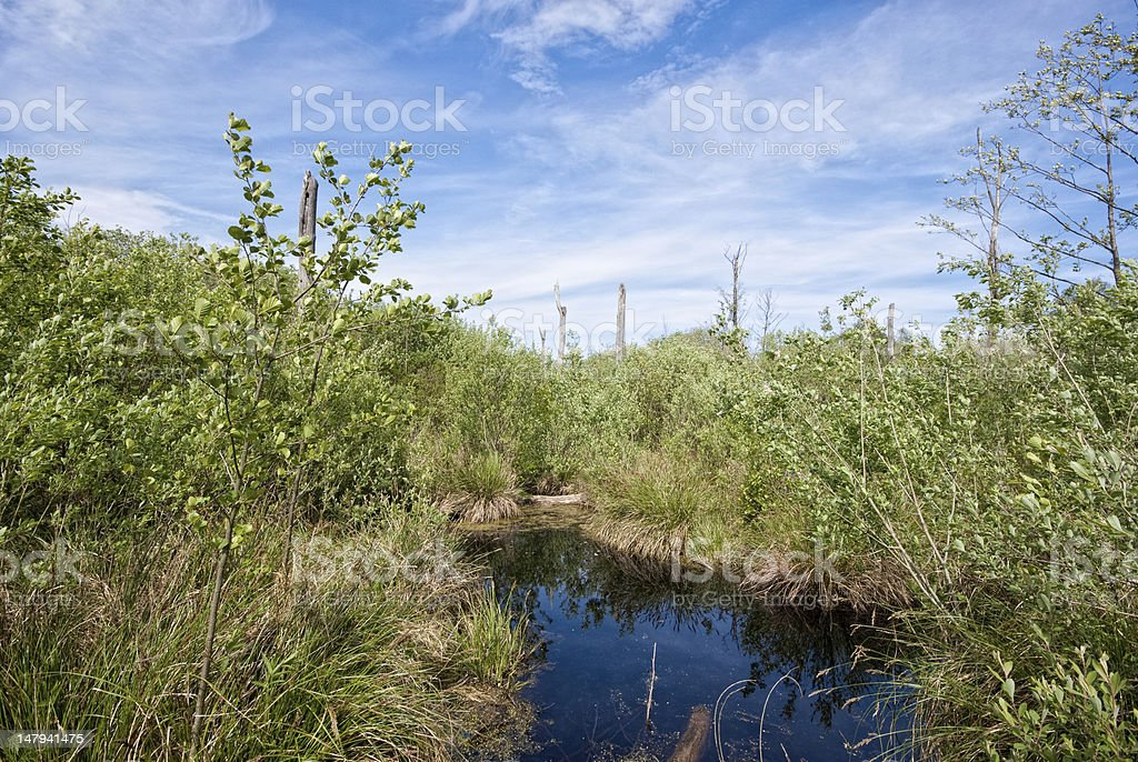 Moor / Peat bog stock photo