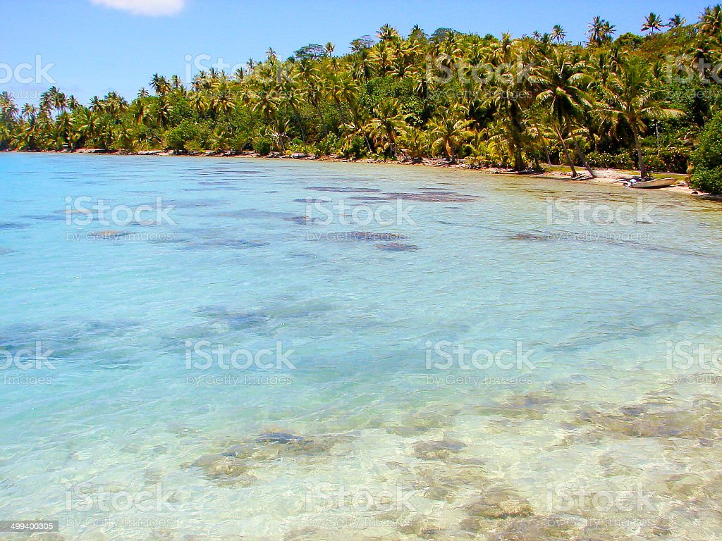 Moorea turquoise beach and green Palm Trees landscape, Polynesia royalty-free stock photo