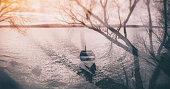 Moored boat on lake shore near tree branches