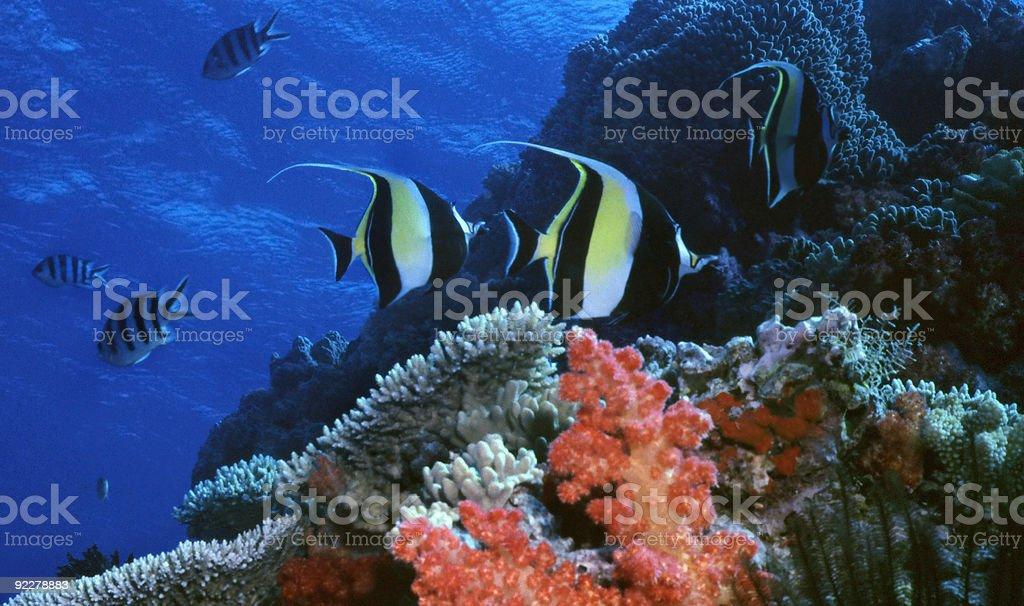 Ide Reef photo libre de droits