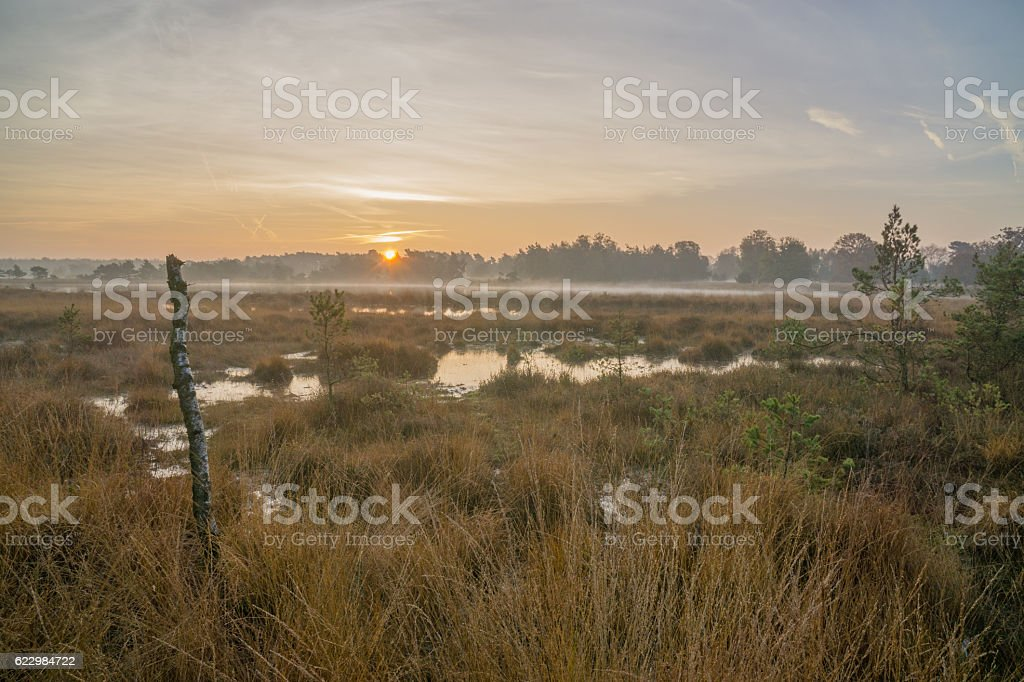 Moorland at dawn stock photo