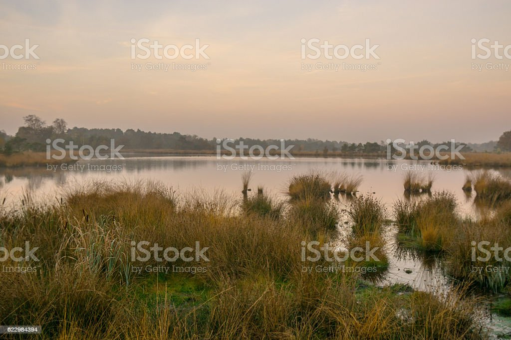 Moorland at Sunrise stock photo