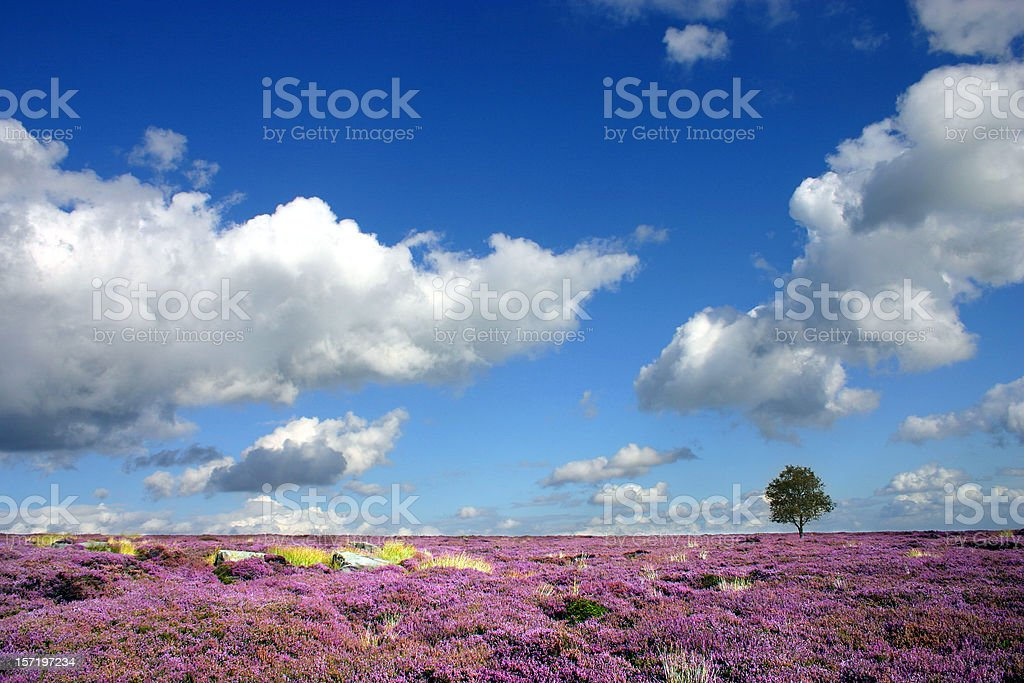 Moorland heather landscape in Derbyshire England royalty-free stock photo