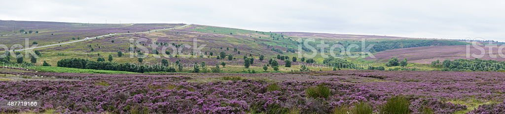 Moorland heather stock photo
