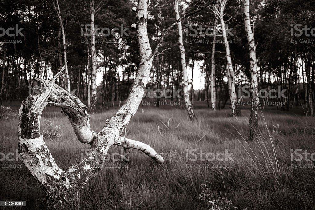 moorlandschaft, schleswig holstein stock photo
