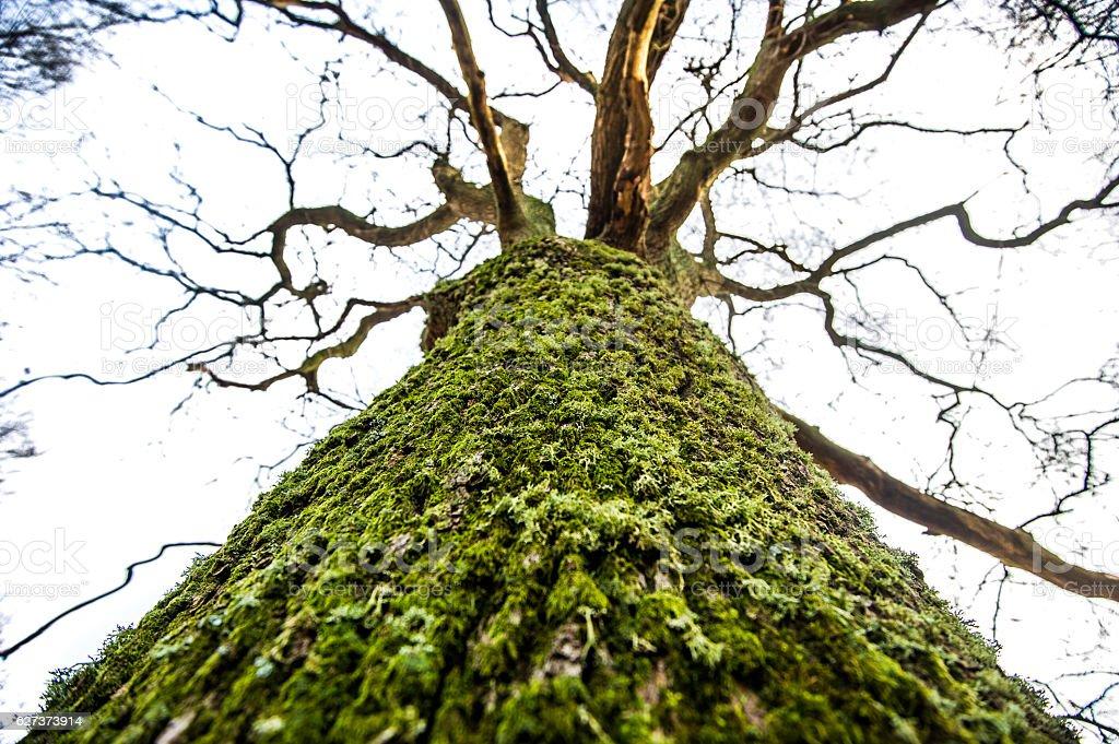Moosbehangender Baum stock photo