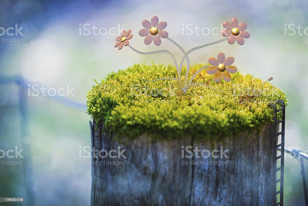 Moosblumen stock photo