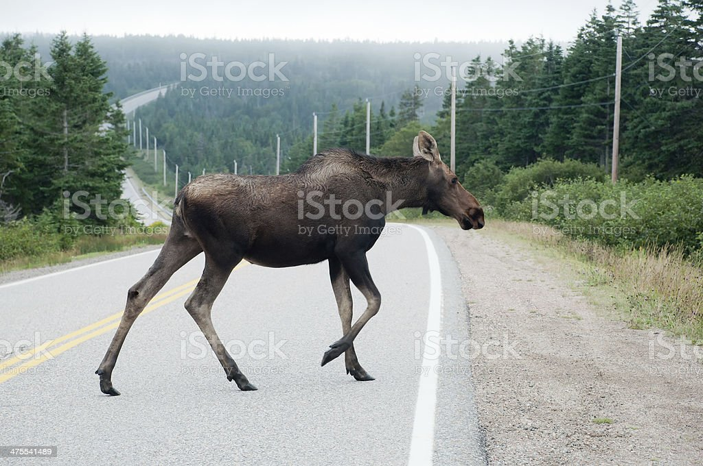Moose Crossing Road - Cape Breton, Nova Scotia stock photo
