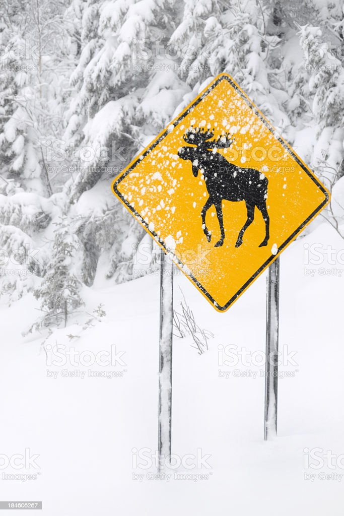 Moose Crossing Sign During A Snowstorm royalty-free stock photo