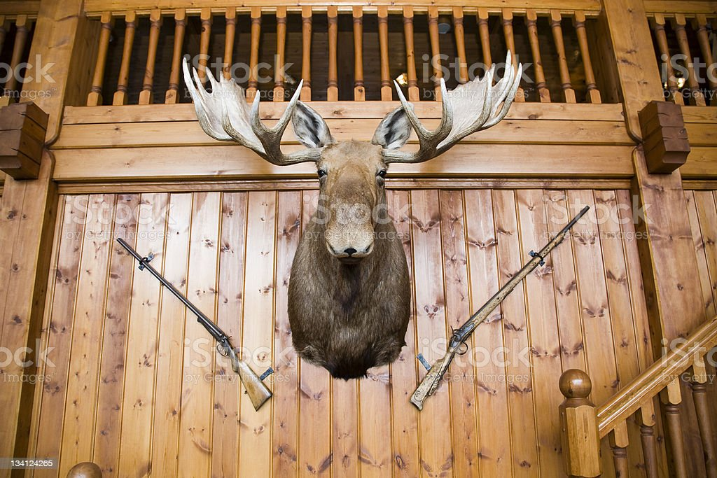 Moose head and guns on wall stock photo