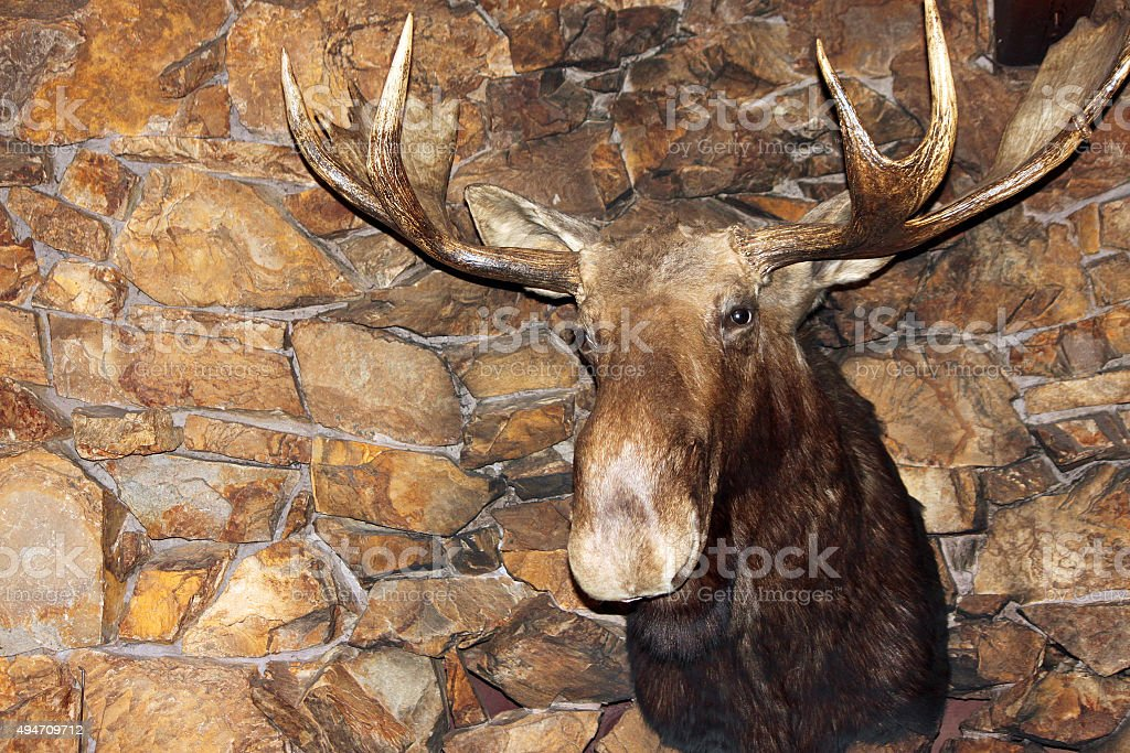 Moose Head on a Stone Fireplace stock photo